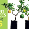 Win 1 of 5 Fruit Salad Trees