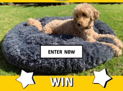 Win 1 of 3 Pet Relaxation Beds