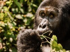 Win a G Adventures Culture & Wildlife of Uganda & Rwanda Tour for 2