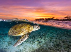 Win a Mon Repos Turtle Encounter Experience for 4